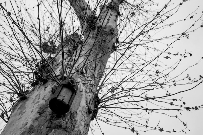 Tree with a small birdhouse