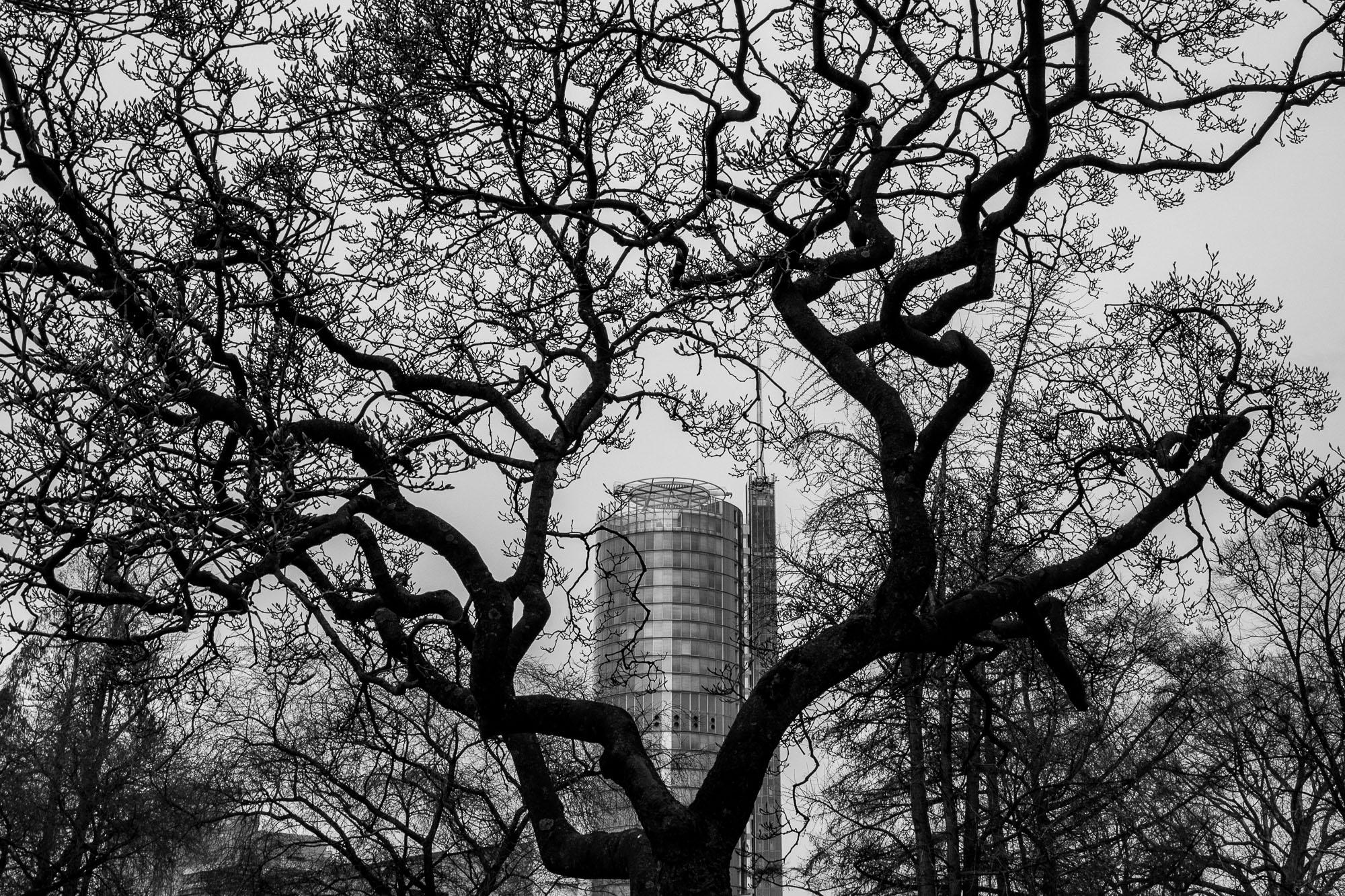 RWE-Turm in Essen shown through tree branches