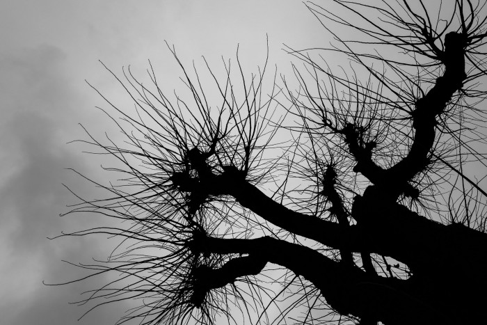 Silhouette of a tree against a clouded sky.