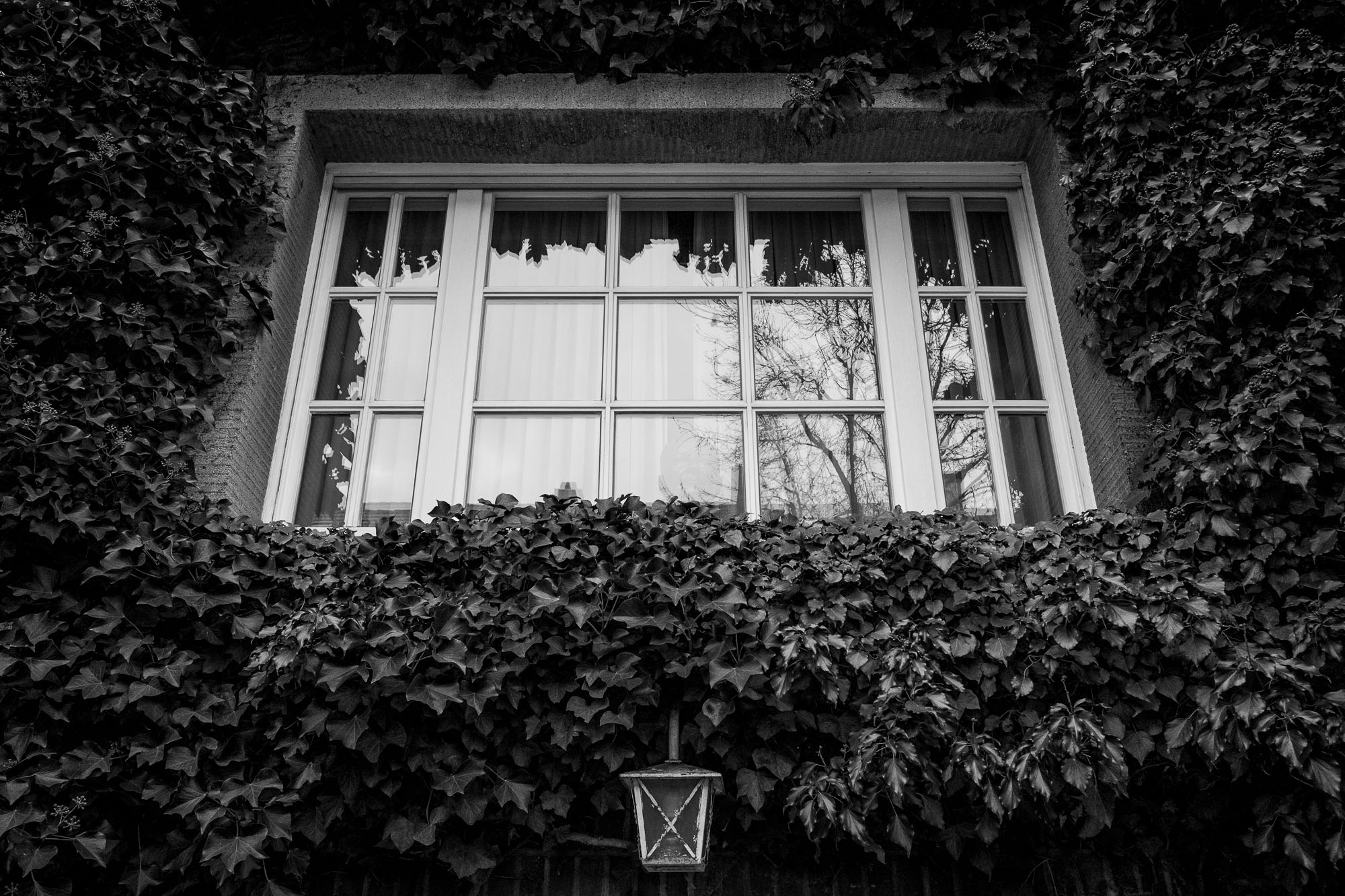 A window with ivy growing all around it