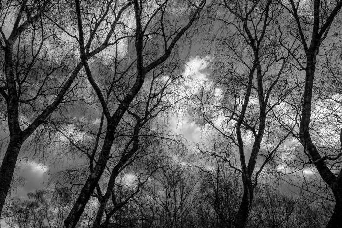 Trees in the wind.