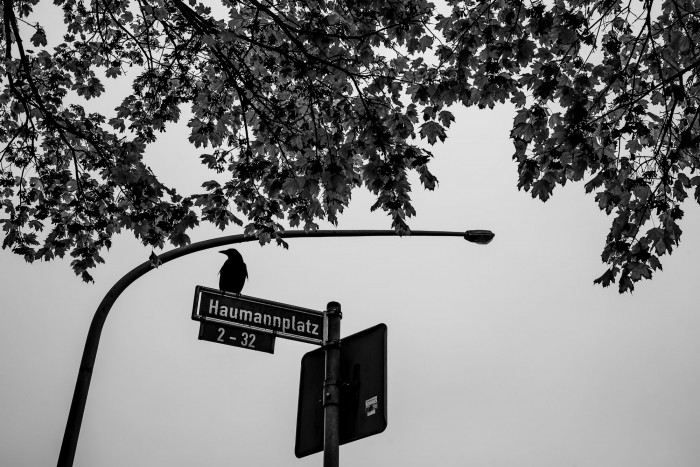 A crow sitting on a streetsign, with a curved lamp post and a tree branch above it