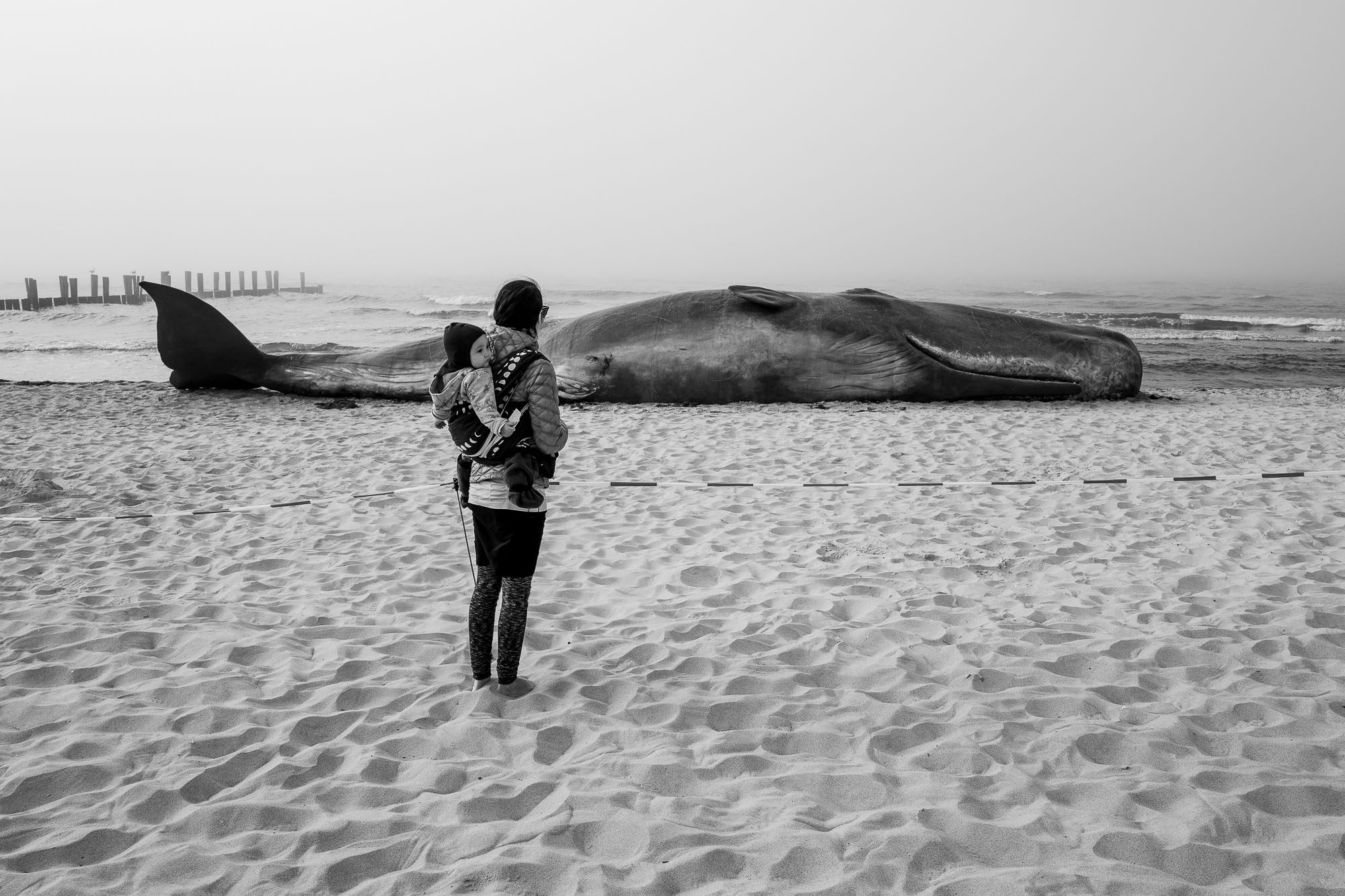 Woman looking at a stranded wale at a beach