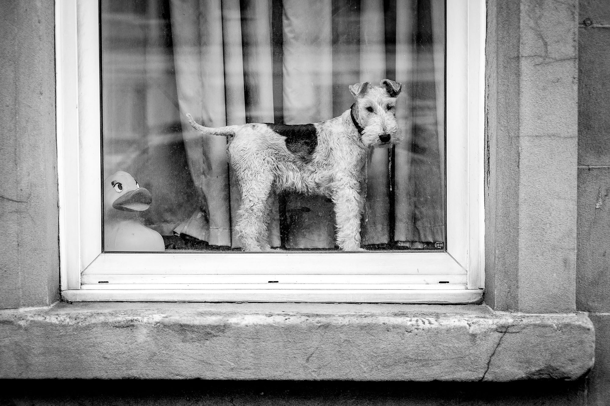 A plastic duck and a dog behind a window