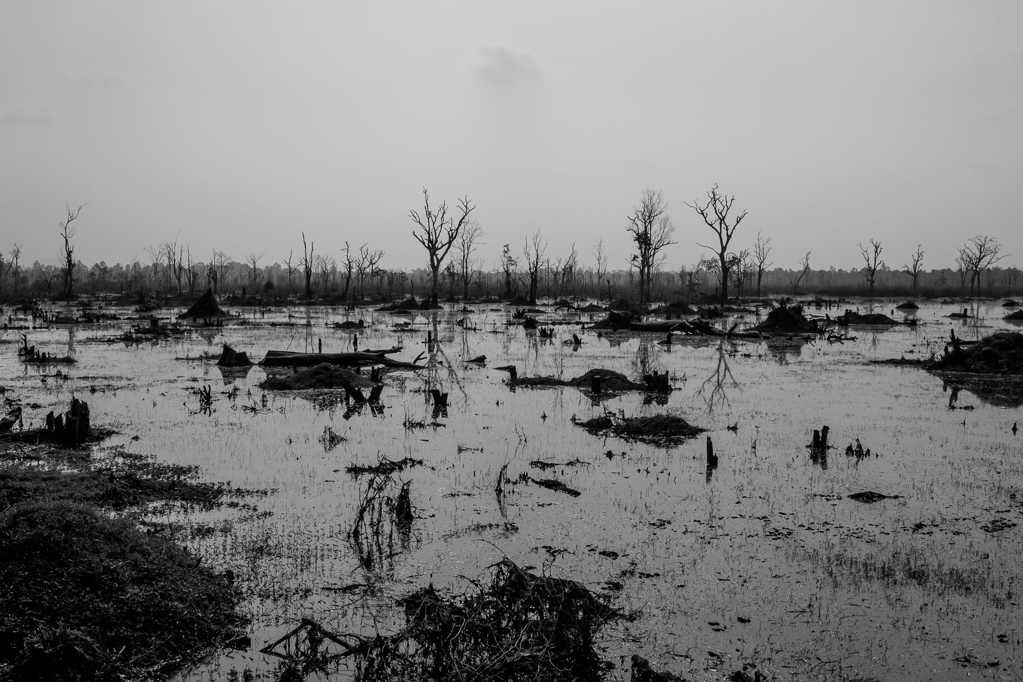 Swamp with dead trees
