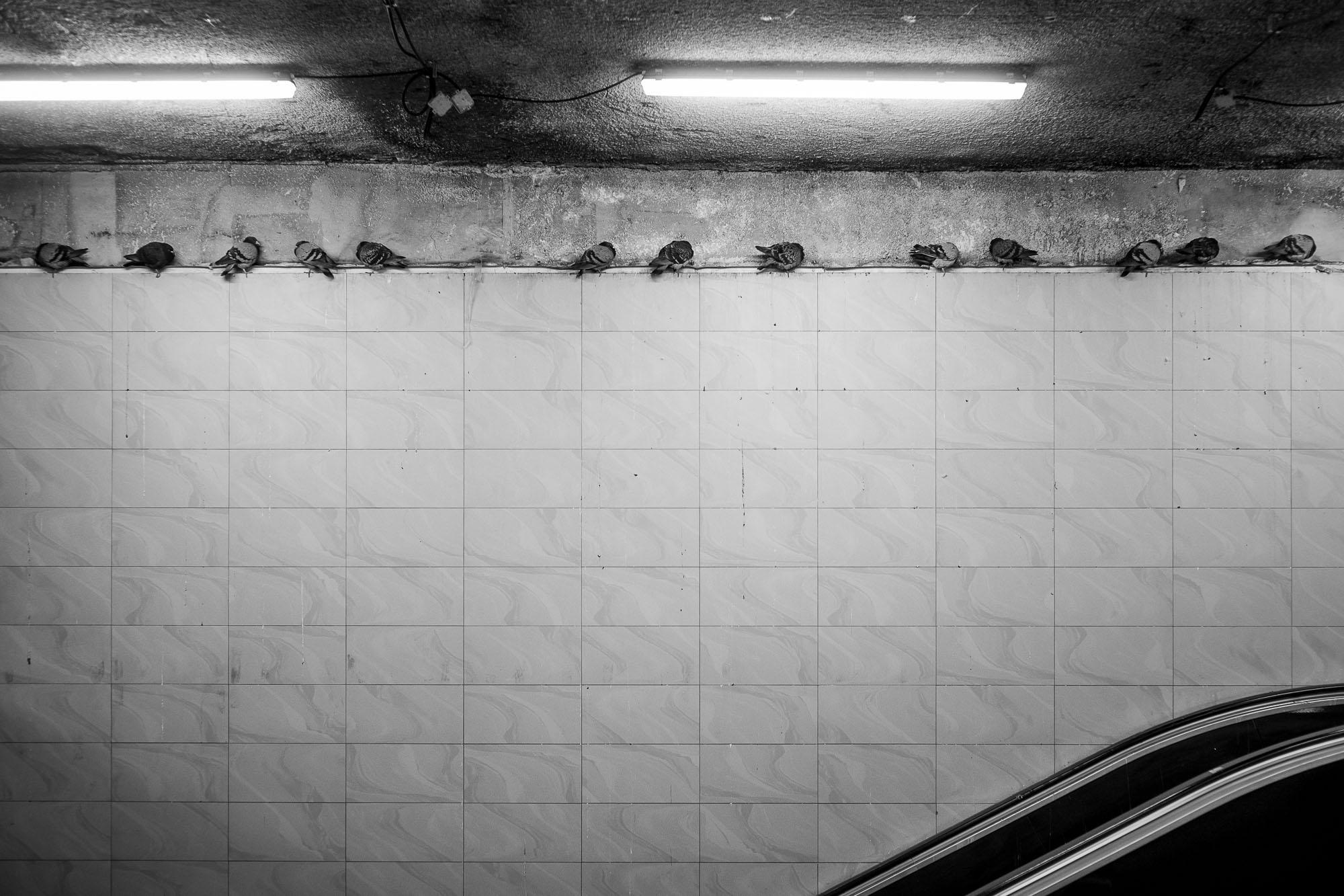 Pigeons on a ledge inside Rüttenscheider Stern subway station