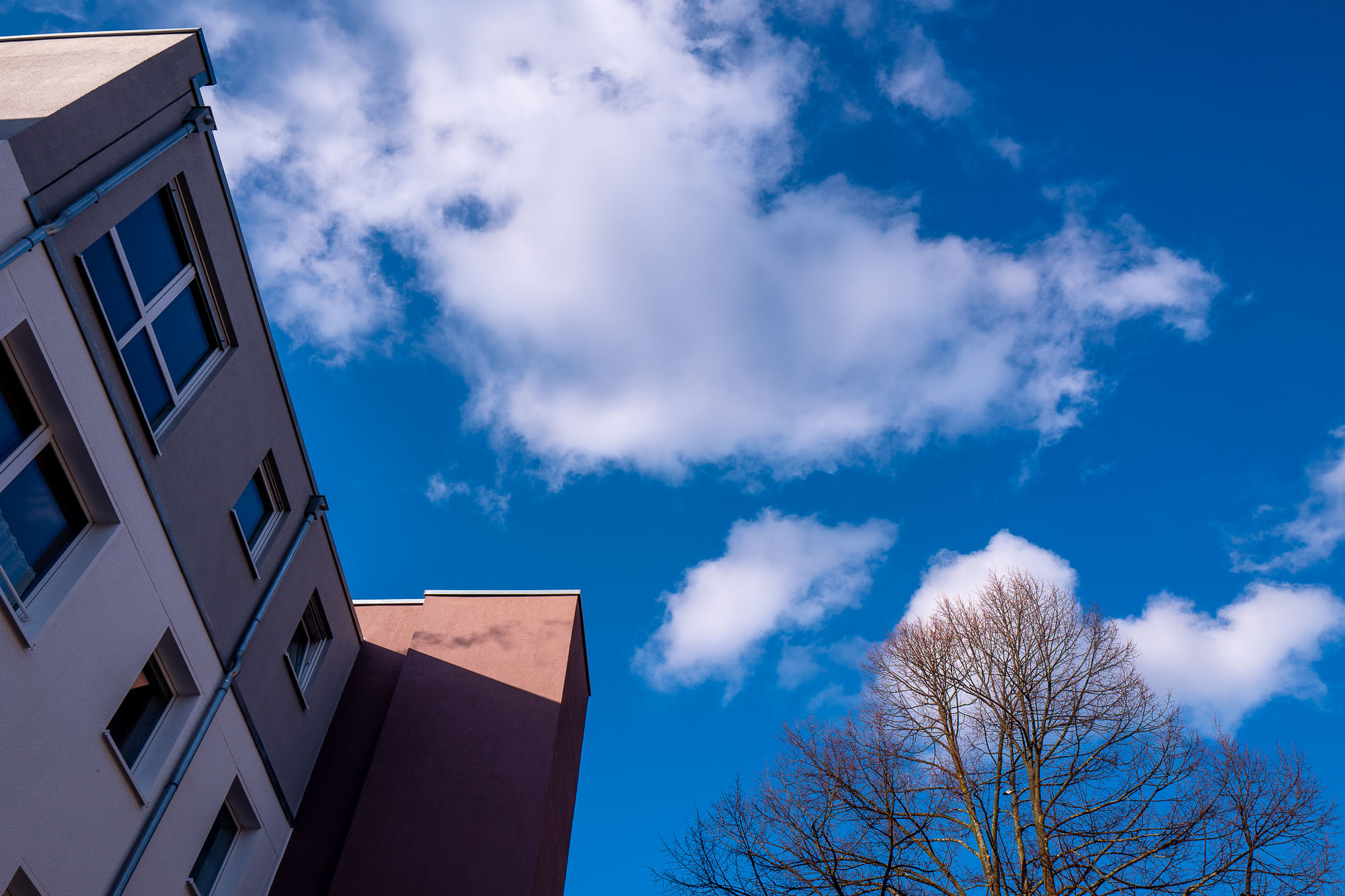 Looking up at a house, blue sky and a tree